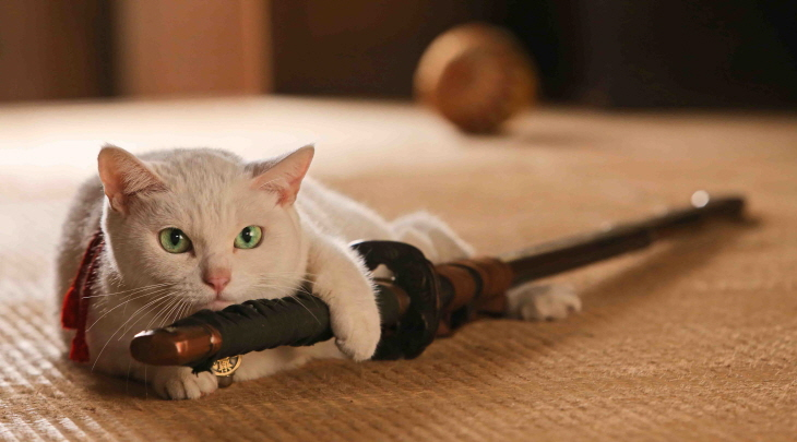 고양이 사무라이